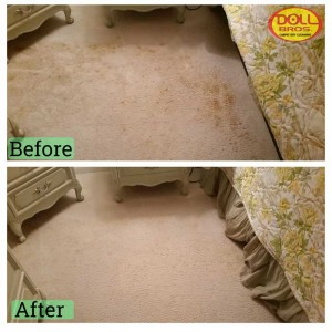 gallery Carpet-Cleaning3