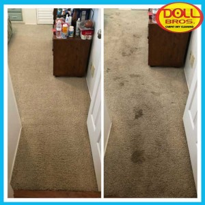gallery Carpet-Cleaning5