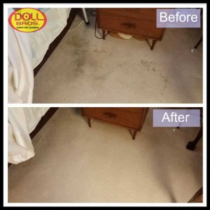 gallery Carpet-Cleaning7